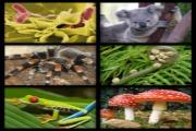 organismer collage