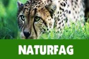 Her kan du finne lenker til naturfagtemaer på ulike språk. Skroll nedover på siden.