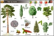 bildetema trær