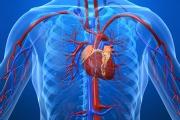 Kroppen, hjertet